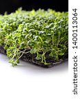 microgreens and healthy sprouts ... | Shutterstock . vector #1400113064