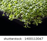 healthy and fresh sprouts on a... | Shutterstock . vector #1400113067