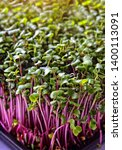 healthy and fresh micro greens... | Shutterstock . vector #1400113091