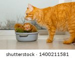 Stock photo red newborn kittens sitting in a bowl on a white table little blind pets close up cat mom picks 1400211581