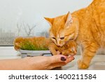 Stock photo red newborn kittens sitting in a bowl on a white table little blind pets close up cat mom picks 1400211584