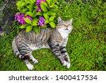 hydrangea macrophylla purple... | Shutterstock . vector #1400417534