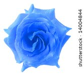Single Blue Rose Covered With...