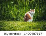 A White And Brown Outdoor Cat...