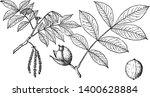 branches of nutmeg hickory tree ... | Shutterstock .eps vector #1400628884