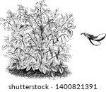 ononis rotundiflora flowers are ...   Shutterstock .eps vector #1400821391