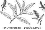 picture shows the branch of...   Shutterstock .eps vector #1400832917