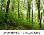 spring deciduous forest in... | Shutterstock . vector #1401035291