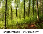 spring deciduous forest at dawn. | Shutterstock . vector #1401035294
