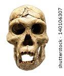fossil skull of homo erectus | Shutterstock . vector #140106307