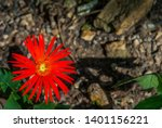 decorative gerbera jamesonii a... | Shutterstock . vector #1401156221