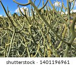 abstract details of green tree... | Shutterstock . vector #1401196961