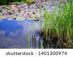 young acorus   cattail bush.... | Shutterstock . vector #1401300974
