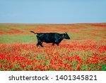 A Cow In A Pasture In A Field...