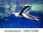 Gentoo Penguins Swimming...