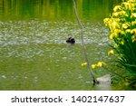 wild bird duck and yellow iris | Shutterstock . vector #1402147637