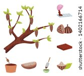 isolated object of cocoa and... | Shutterstock .eps vector #1402166714