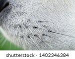 alaskan malamute breed dog... | Shutterstock . vector #1402346384