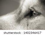 alaskan malamute breed dog... | Shutterstock . vector #1402346417
