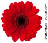 red gerbera flower head... | Shutterstock . vector #1402357094