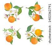 watercolor oranges hanging on...   Shutterstock .eps vector #1402362791