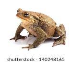european toad  bufo bufo ... | Shutterstock . vector #140248165