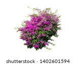Flower Plant Bush Tree Isolate...