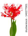 red and white parrot tulip... | Shutterstock . vector #140277001