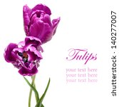 Beautiful Purple Parrot Tulips...