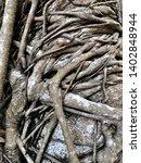intertwined closeup tree... | Shutterstock . vector #1402848944