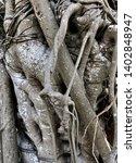 intertwined closeup tree... | Shutterstock . vector #1402848947