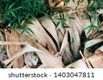 Dry Banana Leaf Unbeautiful...