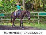 boy horseback riding ... | Shutterstock . vector #1403222804