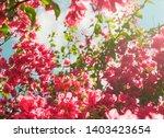 floral background  spring...   Shutterstock . vector #1403423654