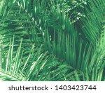 botanical backdrop  exotic...   Shutterstock . vector #1403423744