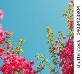 floral background  spring...   Shutterstock . vector #1403423804