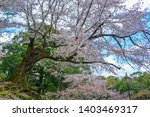 cherry trees and flowers in...   Shutterstock . vector #1403469317