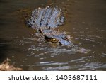 crocodiles are bathing in the...   Shutterstock . vector #1403687111