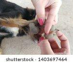 women help remove tick from the ...   Shutterstock . vector #1403697464
