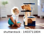 Stock photo child playing with cat at home kids and pets little boy feeding and petting cute ginger color cat 1403711804