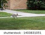 Stock photo a hare running through the backyard 1403831051