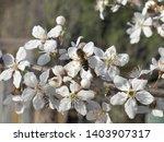 spring background. purity...   Shutterstock . vector #1403907317
