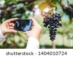 agronomist woman winemaker... | Shutterstock . vector #1404010724