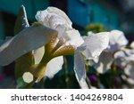 spring spirit  close up of... | Shutterstock . vector #1404269804