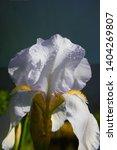 spring spirit  close up of... | Shutterstock . vector #1404269807