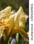 spring spirit  close up of... | Shutterstock . vector #1404269831