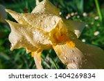 spring spirit  close up of... | Shutterstock . vector #1404269834