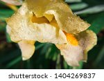 spring spirit  close up of... | Shutterstock . vector #1404269837