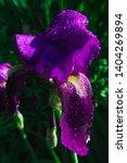 spring spirit  close up of... | Shutterstock . vector #1404269894