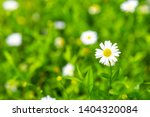 white dasies flower in natural... | Shutterstock . vector #1404320084